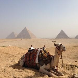 11エジプト