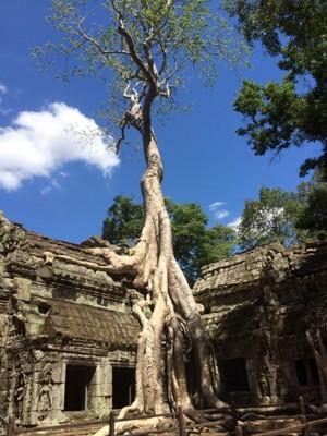 2015 カンボジア・ベトナム_タプローム2